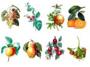 Stickers (8pics 6.4cm x 8.9cm each) Vintage Kitchen Fruit Berry FLONZ Craft
