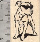 American Pitbull dog Rubber Stamp in Sunglasses