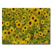 Trademark Fine Art A Sunflower Day by Kurt Shaffer Canvas Wall Art, 90cm x 120cm