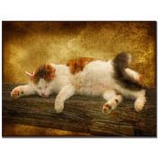 Trademark Fine Art Sleeping Kitty by Lois Bryan Canvas Wall Art, 41cm x 60cm