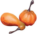 Mini Pumpkins & Gourds Fall Harvest Display Fillers Country Primitive Seasonal Décor