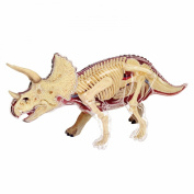Learn about the Triceratops Dinosaur Anatomy- 23cm 4-D See-thru Model