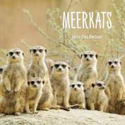 Meerkats 2018 Calendar