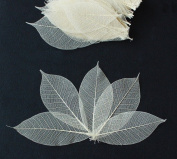 100 Skeleton Leaves Rubber Tree Natural colour Scrapbooking Craft DIY CARD Wedding