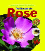 The Life Cycle of a Rose
