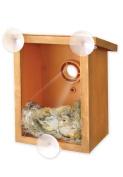 New Windows Mount Spy Birdhouse Nestingfeeding Nature See Bird Through Window