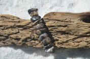 Turritella Stones on a Silver French Barrette Hair Clip