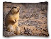 Custom Characteristic Animal Popular 50cm x 70cm One Side Pizza Rectangle Pillowcase suitable for Twin-bed