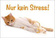 """Magnetic Fridge Magnet, relaxed Cat no Stress """"Format 88 x 60 MM"""