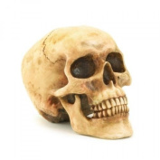 Grinning Realistic Replica Human Skull Home Statue, Gifts and Decor, New