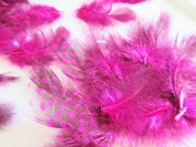 40pc (4 gramme) Dyed Guinea Feather Assorted Sizes (V4-Hot Pink) US SELLER SHIP FAST