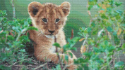 Lion Cub Cross Stitch Pattern - Detailed Photorealistic Design