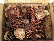 0.9kg Box Assorted Natural Pine Cones