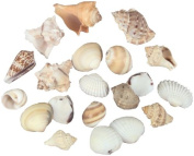 Sea Shells In Net 240ml-Natural