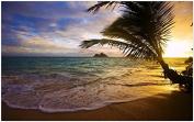 Tropical-sea-coast-palm-tree-sunset Furniture & Decorations magnet fridge magnets