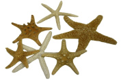 U.S. Shell, Inc. Starfish Mix