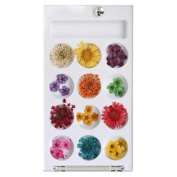 BMC 12 Style Variety Multicolor 3D Nail Art Real Dried Pressed Flowers - Set 2