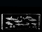 Asfour Crystal 1168-150-25 5.9 L x 2.4 H x 1.4 W in. Crystal Laser-Engraved Sea Life Sealife & Nautical Laser-Cut