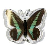 Ed Speldy East Company MT504 Real Bug Common Blue Bottle Butterfly Magnet