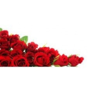 Red Rose (type J Malone)* - 1932 - Candle & Soap Fragrance Oil - 4 Oz (120 ml) - High Performance Supplie - Special Promotion.