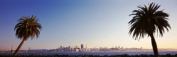 Panoramic Images PPI78129L Palm Trees At Dusk San Francisco California USA Poster Print by Panoramic Images - 36 x 12