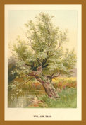 Buy Enlarge 0-587-17652-0P12x18 Willow Tree- Paper Size P12x18