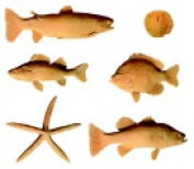 Sax Assorted Pattern Fish Print Model Set Original Set - 6