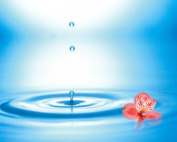 Panoramic Images PPI117989 Water drops rising from water rings with small coral flower Poster Print by Panoramic Images - 24 x 20