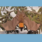 Sunny Toys NP8224C 60cm . Bat - Flying Fox Animal Puppet