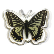 Ed Speldy East Company MT502 Real Bug Asian Swallowtail Butterfly Magnet