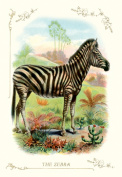 Buy Enlarge 0-587-11198-4P12x18 Zebra- Paper Size P12x18