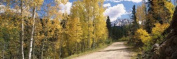 Panoramic Images PPI128795L Aspen trees on both sides of a road Old Lime Creek Road Cascade El Paso County Colorado USA Poster Print by Panoramic Images - 36 x 12
