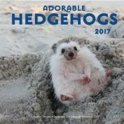 Adorable Hedgehogs