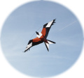 Red Kite Single Line Bird Of Prey Kite