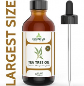 Tea Tree Oil - 100% Pure and Natural Therapeutic Grade Melaleuca Backed by Medical Research - Large 120ml - Product of Australia - with Premium Glass Dropper by Essential Oil Labs