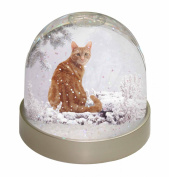 Ginger Winter Snow Cat Snow Dome Globe Waterball Gift