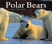 Polar Bears 2017