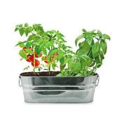 BUZZY INC Salad Garden Windowsill Grow Kit