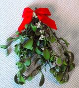 Mistletoe - 1 Large Bundle - 7 to 25cm - Fresh, Real, All Natural