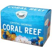 Crystal Growing Coral Reef - Science Kit