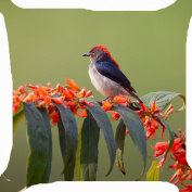 cushion cover throw pillow case 46cm colourful feather bird orange flower tree forest cute both sides image zipper