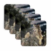 Wolf on Rocks Coasters - Set of Four