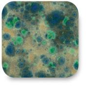 AMACO Crystaltex Lead-Free Non-Toxic Glaze, 1 pt Jar, Fantasia CTL-42