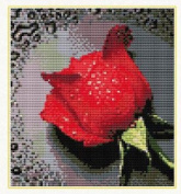 Home Decoration DIY Printed Needlework Sets Counted Cross Stitch Kits Embroidery Kits, Red Rose with Dew