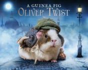A Guinea Pig Oliver Twist