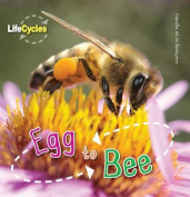 Egg to Bee (Lifecycles)