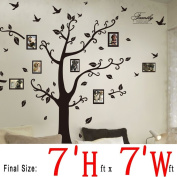 DaGou, Huge 2.1m(h) X 2.1m(w) Wall Decals, Memory Tree and Birds, Wall Stickers, Murals