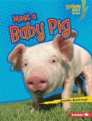 Meet a Baby Pig