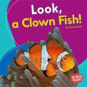 Look, a Clown Fish!