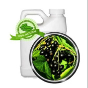 Black Currant Seed Oil - 1890ml - Cold-pressed